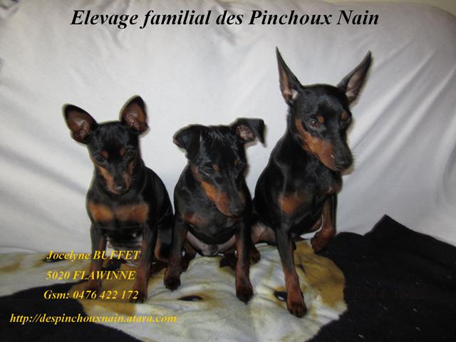 pinchoux_site